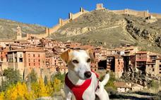 Pipper, el perro 'influencer', promociona en Valencia el turismo 'dog friendly'