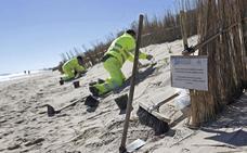 El Gobierno encarga el quinto proyecto de regeneración de El Saler desde 2007
