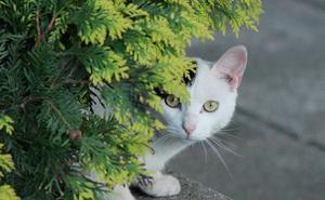 ¿Puede un gato causar una enfermedad mental?