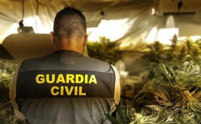 Cerco al gran negocio ilegal de la marihuana