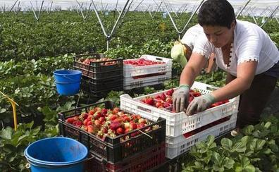 Ofrecen 23.000 empleos en la fresa y sólo acuden 970 personas