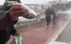 ¿Por qué llueven peces en Malta?