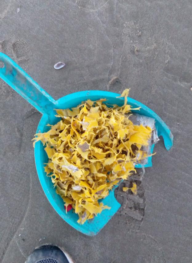 Alboraya denuncia la presencia de microplásticos en la playa de la Patacona