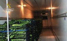 Un camión de gran tonelaje transportaba más de 270 kilos de marihuana camuflada entre apio y lechuga