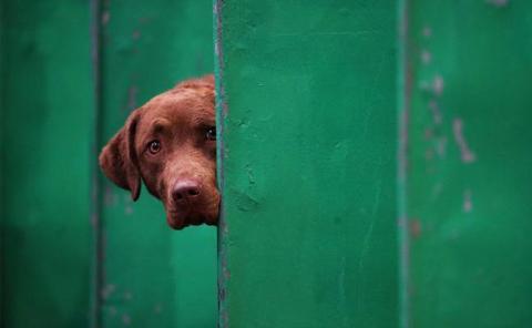 La mayor exposición canina del mundo