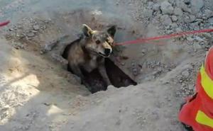 Complejo rescate de un perro atrapado en una tubería subterránea de Cullera