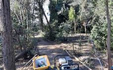 Ecologistas exigen paralizar la poda en L'Hort d'Almenar y crear una comisión gestora