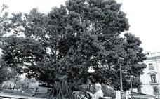 El árbol, señor del paisaje