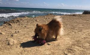 Más multas por llevar mascotas sueltas en la playa