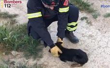 Rescatan a un perro pequeño de un desagüe tras oírlo llorar