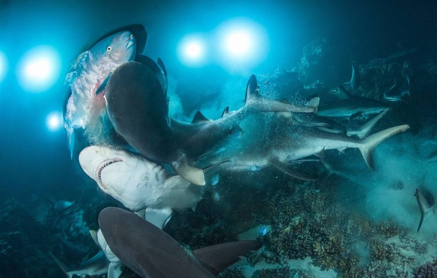 Las mejores imágenes submarinas de 2019