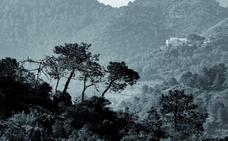 El valor de nuestros bosques