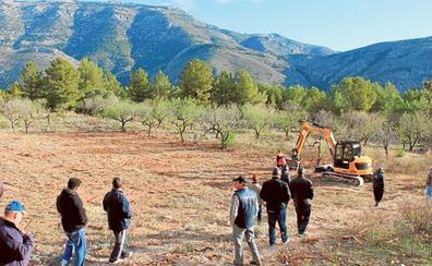 La Xylella sigue extendiéndose y la zona en cuarentena alcanza ya el sur de Valencia