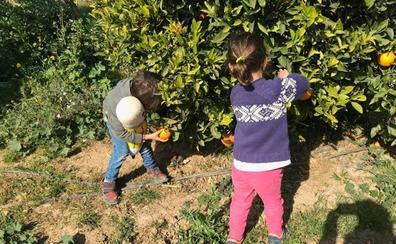 Agricultor a distancia y otras formas de acercase hasta la huerta en Valencia