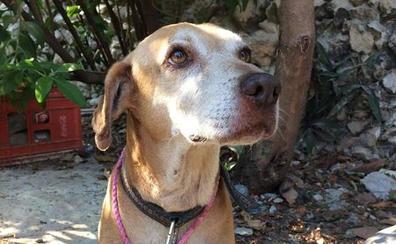 Deko, el perro que vende postres caseros para pagar su quimioterapia