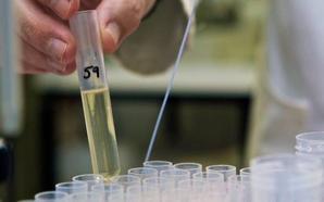 Descubren un nuevo antibiótico «natural» capaz de matar las bacterias resistentes
