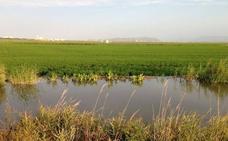 Capital de una red de lagos y humedades
