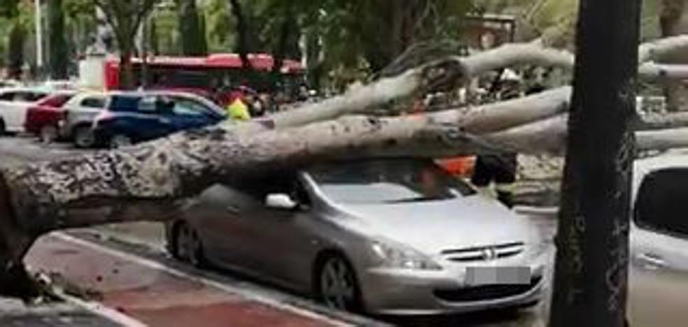 Un árbol se desploma y destroza un coche frente al colegio El Pilar de Valencia