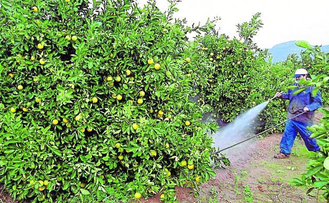 Así afronta el sector citrícola una de las peores crisis de su historia