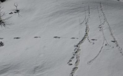 El ejército de la India dice haber descubierto huellas del Yeti