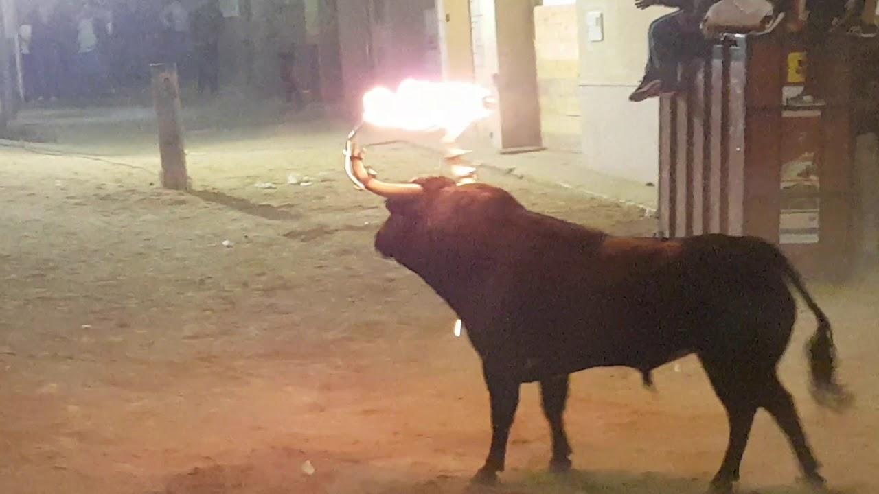 Programa de bous al carrer del fin de semana en Valencia, Alicante y Castellón