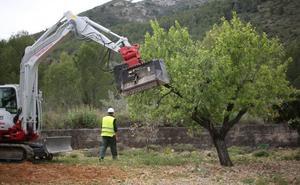 Afectados por la Xylella cargan contra la Generalitat por las indemnizaciones: «Lo que están pagando es una tomadura de pelo»