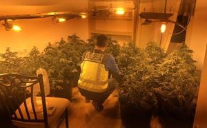 Detenido un hombre por convertir su casa de Gandia en un punto de cultivo acelerado de marihuana