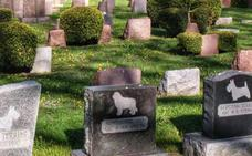 Cementerio municipal animal