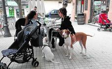 Más perros que niños en los hogares valencianos