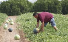 La sandía se suma a los cultivos que desaparecen del campo valenciano