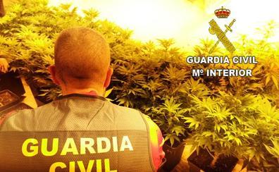 Alquilaban chalés de lujo en Valencia para cultivar marihuana