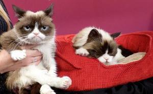 Muere Grumpy Cat, la 'gata gruñona' más famosa de internet