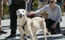 Desfile de perros abandonados AUPA-Bioparc 2019