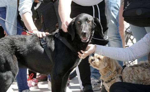 Desfile de adopción de perros abandonados en Valencia