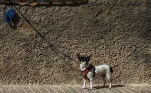 La Policía Nacional detiene en Valencia a un joven por agredir a un hombre con la correa de su perro