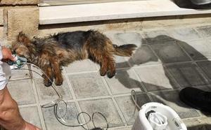 Tres personas y dos perros, rescatados de un incendio en una casa en Utiel