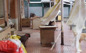 PACMA denuncia la situación del refugio de animales de Benimàmet