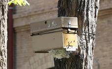 Las abejas emigran a la ciudad