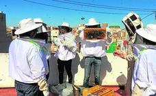 Una asociación de apicultores quiere instalar cinco colmenas en un solar junto a La Rambleta
