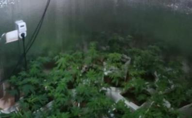 Hallan una plantación de marihuana en el Marítim tras las quejas por el fuerte olor