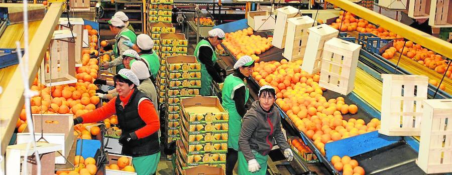 Las cooperativas de Castellón se mantienen en alza y generan empleo