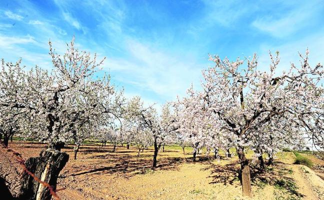 Un plan común agrícola contra el abandono del campo