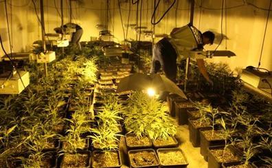 Cae en Valencia una organización criminal que explotaba a seis personas y se dedicaba al cultivo al por mayor de marihuana