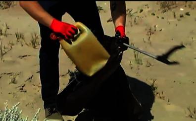 Voluntarios regeneran las dunas de El Saler y limpian la playa de plásticos