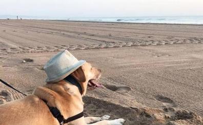 Las mejores playas para perros en Valencia, Alicante y Castellón