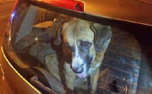 La Policía alerta de un bulo sobre perros encerrados en coches