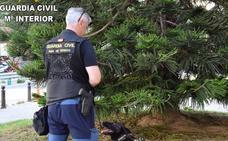 La Guardia Civil se incauta de 200 gramos de drogas en la cárcel de Picassent
