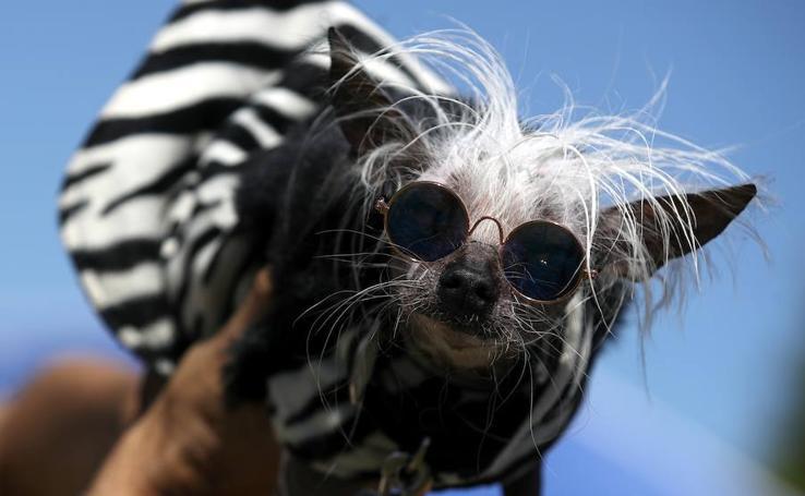 California celebra el concurso de anual de 'Los Perros más Feos del Mundo'