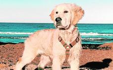 La mascota de Yago Sanz, un cachorro en familia