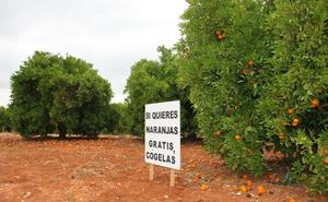 Naranjas gratis al no poder venderlas